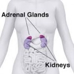 adrenal position