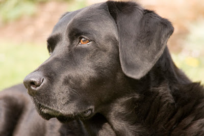 Can dogs sniff out cancer?